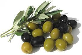 buah zaitun
