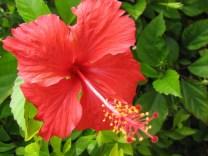 bunga_raya1