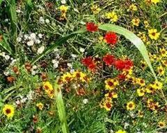 madu bunga liar3