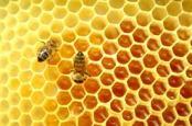 madu lebah