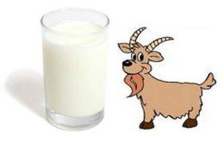 susu kambing