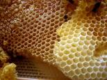 lilin lebah